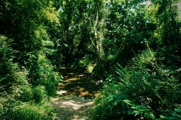 Birkhead Trail